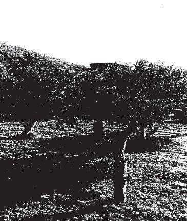 Liveri (NA) Via Ponte