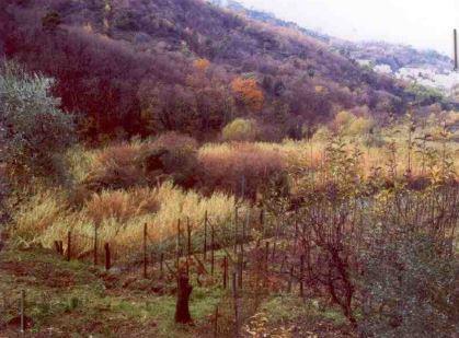 Ceriana (IM) Localita' Valle o Frontè 25