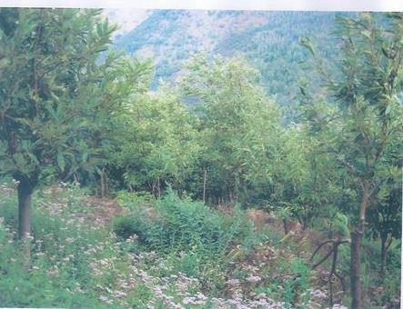 Moschiano (AV) Localita' Grignano