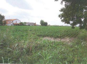 Montagnana (PD) Via Sant'Antonio - Via Gens Vassidia 4