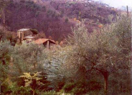 Ceriana (IM) Localita' Valle o Fronte' 1050