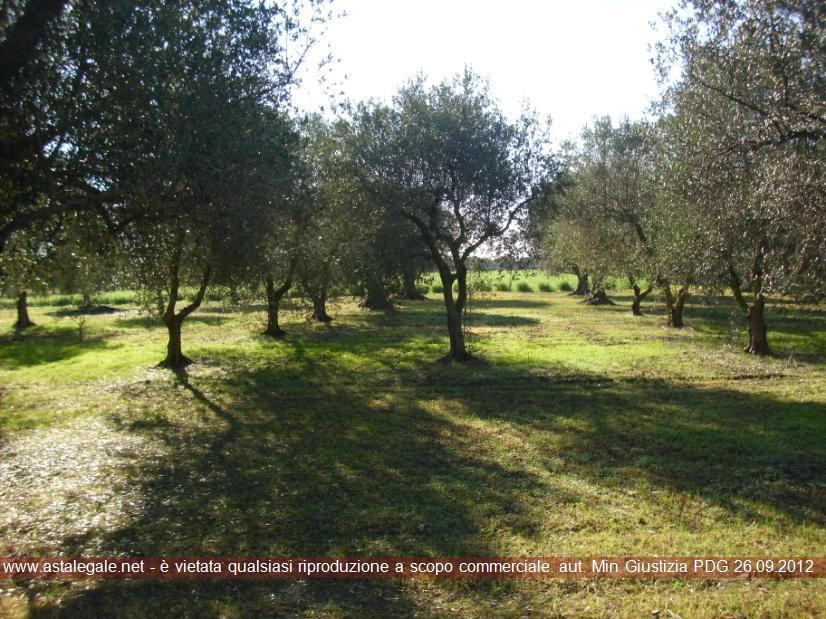 Brindisi (BR) Contrada Belloluogo snc