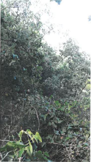 Carovigno (BR) Contrada Parco Grande o Catanzani sc
